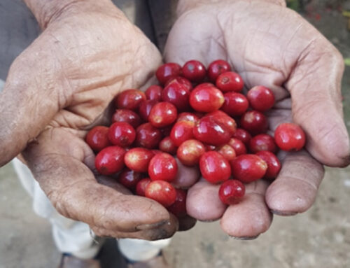 From coffee seeds to Hagen Espresso Bars